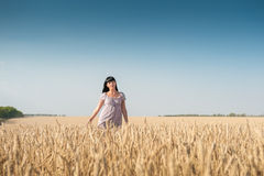 Beautiful young woman on a field of wheat. Beautiful young woman walking on a field of wheat Royalty Free Stock Photo
