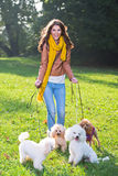Beautiful young woman with four poodles Stock Photography