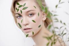Eucalyptus for skincare royalty free stock photo