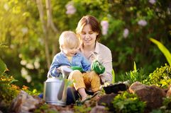 Beautiful young woman and her cute son planting seedlings in bed in the domestic garden at summer day. Beautiful young women and her cute son planting seedlings royalty free stock photos