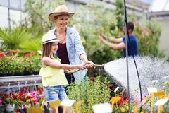 Beautiful young woman with her daughter watering the plants with a hose in the greenhouse. stock photography
