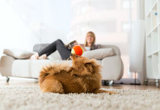 Beautiful young woman with her dog playing with ball at home. Stock Images
