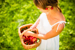 Beautiful young woman holding a basket vith cherries Royalty Free Stock Images