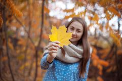 Beautiful young woman holding a bunch of autumn leaves. Gorgeous young woman in autumn in park with big yellow leaves, smiling and enjoying nature. Natural royalty free stock photography