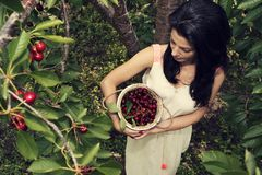 Beautiful young woman holding full white bucket with cherries shooting from above stock photography