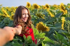Beautiful young woman holding hands in a sunflower field royalty free stock image