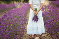 Beautiful young woman, holding lavender in a field Stock Photography
