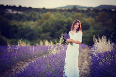 Beautiful young woman, holding lavender in a field Stock Image