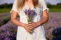 Beautiful young woman, holding lavender in a field on sunset. Beautiful young woman, holding lavender in lavender field Stock Images