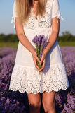 Beautiful young woman, holding lavender in lavender field. Beautiful young woman, holding lavender in a field on Stock Photos