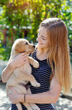 Beautiful young woman holds a puppy Labrador Stock Photography