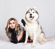 Beautiful young woman with a husky dog Stock Image