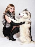 Beautiful young woman with a husky dog Royalty Free Stock Image