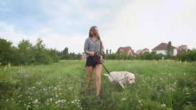 Beautiful young woman and labrador dog walking in the park in summer day. Happy times with pets stock footage