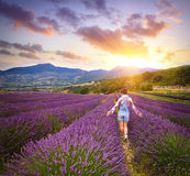 Beautiful young woman in lavender field Stock Photography