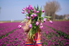 Woman with long red hair wearing a striped dress holding a bouquet of purple tulips flowers on background on purple tulip fields royalty free stock photography