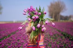Woman with long red hair wearing a striped dress holding a bouquet of purple tulips flowers on background on purple tulip fields stock image