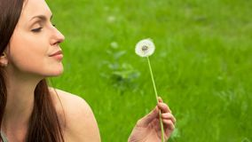 Beautiful Young Woman Looking on Dandelion in her hand. Beautiful Young Woman Looking on Dandelion, holding it in her hand. Bright green grass meadow in the stock video