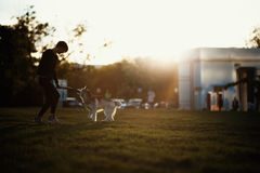 Beautiful young woman playing with funny husky dog outdoors in park at sunset  or sunrise Stock Photos