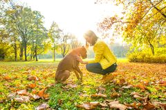 Beautiful young woman playing with her Dog in the forest Royalty Free Stock Photo