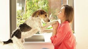 Beautiful young woman is playing by the window with her dog. Pet begs for a treat.