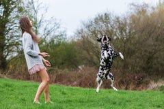 Young woman plays with an Dalmatian dog outdoors. Beautiful young woman plays with an Dalmatian dog outdoors Royalty Free Stock Photos