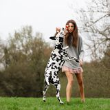 Young woman plays with an Dalmatian dog outdoors. Beautiful young woman plays with an Dalmatian dog outdoors Royalty Free Stock Photography