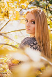 Beautiful young woman posing in an autumn forest Stock Image