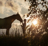 Beautiful young woman posing with a horse Royalty Free Stock Photo
