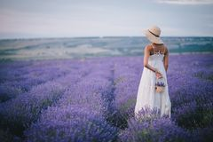 Beautiful young woman posing in a lavender field. Beautiful young woman in a white dress posing in a lavender field Royalty Free Stock Photography