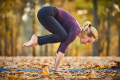 Beautiful young woman practices yoga asana Bakasana - crane pose on the wooden deck in the autumn park. Beautiful young woman practices yoga asana Bakasana royalty free stock photo