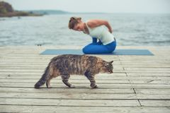 Beautiful young woman practices yoga asana on the wooden deck near the lake. Cat walking on the foreground.  stock images