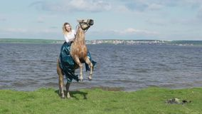 Beautiful young woman riding a horse in a field with flowers. The horse stands on hind legs stock video footage