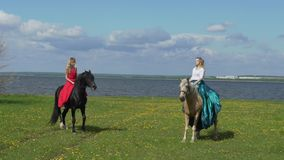 Beautiful young woman riding a horse in a field with flowers. The horse stands on hind legs stock video