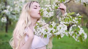 Beautiful young woman in spring flowering garden. She strokes and kisses the buds on a branch stock video