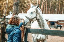 Beautiful young woman stroking the nose of a gray horse, love an stock image