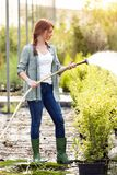 Beautiful young woman taking care and watering flowers with hose in the greenhouse. Shot of beautiful young woman taking care and watering flowers with hose in stock photos