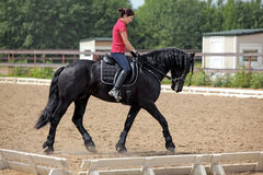Beautiful young woman trotting black dressage horse. Young female riding her beautiful friesian black horse Stock Image