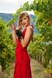 Beautiful young woman in vineyard holding a grape Stock Images