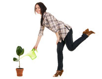 Beautiful young woman watering a plant Royalty Free Stock Image