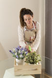 Beautiful young woman watering plants Royalty Free Stock Photos