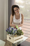 Beautiful young woman watering plants. Lovely smiling brunette woman watering a plant in her living room Royalty Free Stock Image