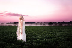 Beautiful young woman in a wedding dress on a pink dawn Royalty Free Stock Photography