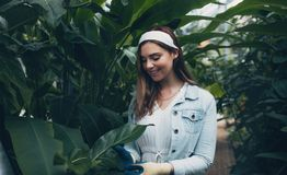 Beautiful woman working in greenhouse. Beautiful young woman working in greenhouse. Happy female gardener taking care of plants Stock Photography
