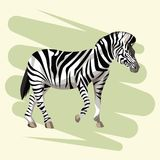 Beautiful zebra drawing Royalty Free Stock Images