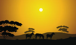 Beautiful zebra silhouette scenery Stock Image