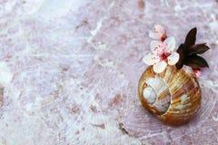 Beautiful zen-like nature background Stock Image