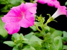 Beautifule цветка конца-вверх Стоковые Фото