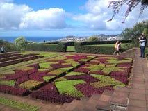 Beautifull庭院马德拉岛葡萄牙 免版税库存图片