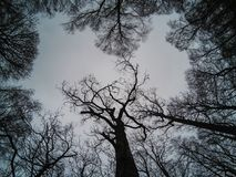 Beautifull树的形状和啪答声 图库摄影